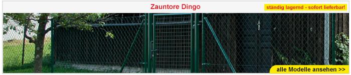 Zauntor Dingo
